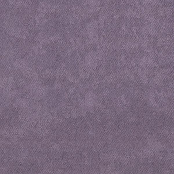 Iris lavender